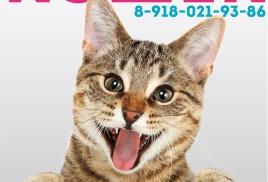 Международная выставка кошек 22-23 сентября 2018 г.
